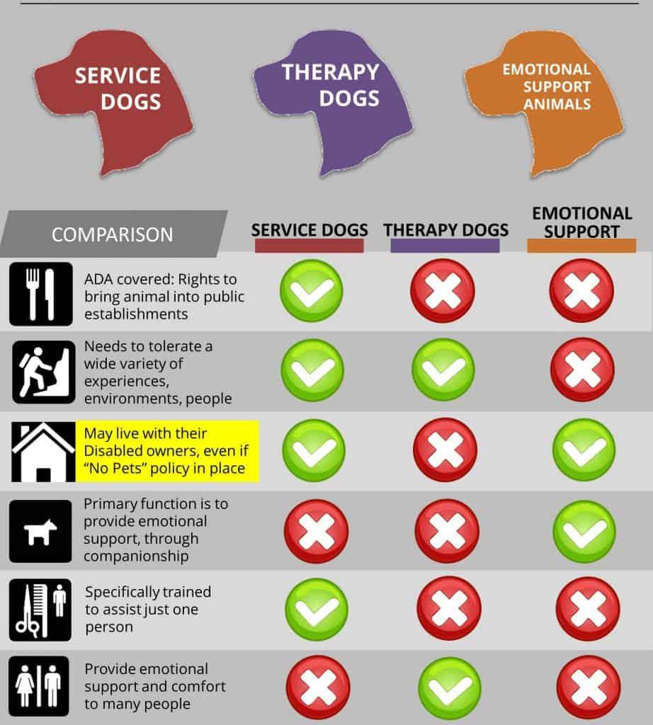 service_dog_info